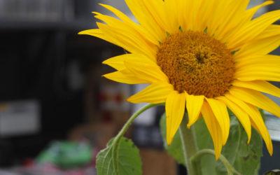 """Après de longues """"vacances"""" forcées, Le Slow Food Café fait sa rentrée le 02 juin…"""
